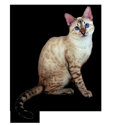 Выставка кошек Челябинск 22- 23 октября 2016